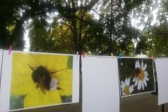 Изложбата на авторски снимки на диви пчели 2