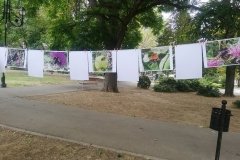 Изложбата на авторски снимки на диви пчели 3