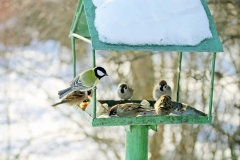 На птиците през зимните месеци им липсва обичайната храна като семена и плодове, затова е добре, да се погрижим за тези, които са близо до нас, изработвайки хранилки